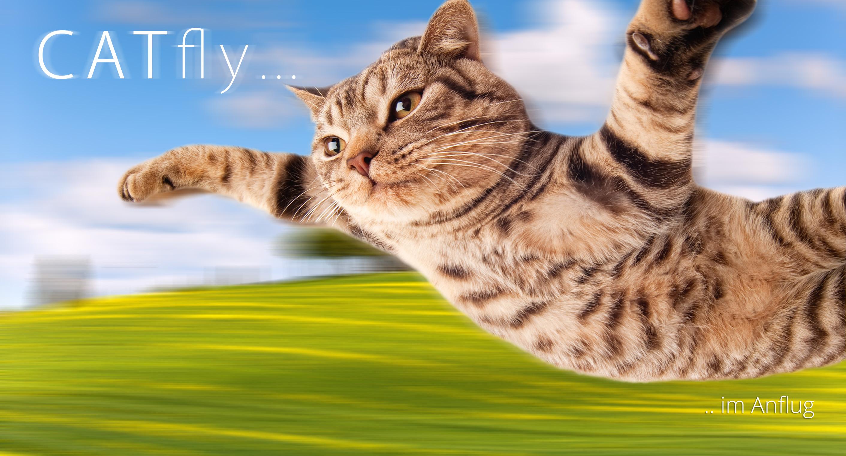 catfly-ad-version-1-11